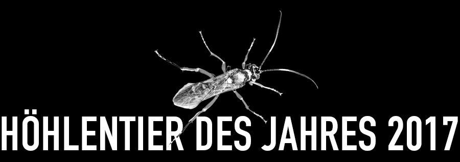 Vierfleck-Höhlenschlupfwespe - Höhlentier des Jahres 2017 - Header