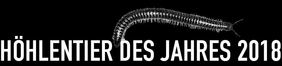Schwarzer Schnurfüßer - Höhlentier des Jahres 2018 - Header