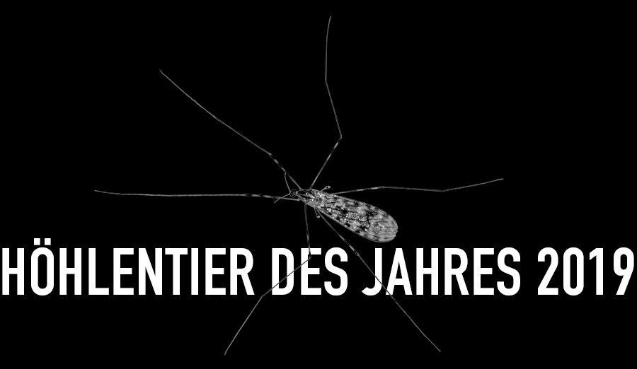 Gemeine Höhlenstelzmücke - Höhlentier des Jahres 2019 - Header