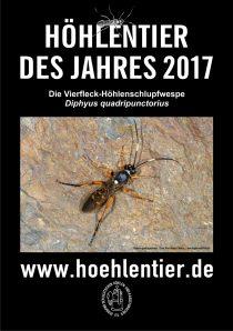 Vierfleck-Höhlenschlupfwespe - Höhlentier des Jahres 2017 - Poster