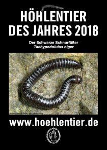 Schwarzer Schnurfüßer - Höhlentier des Jahres 2018 - Poster